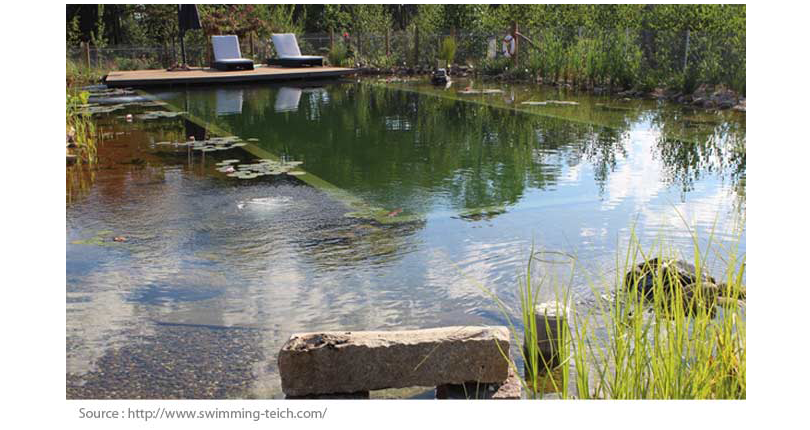 Natural Pools: 5 Things You Should Know